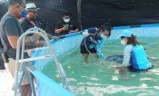 Muere mamá delfín y cría rescatados cerca de Tulum